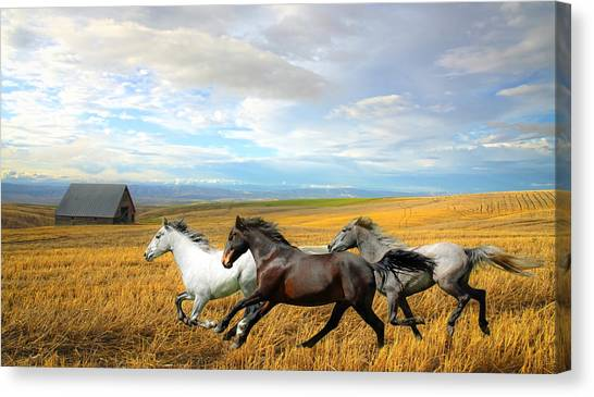 Canvas Print - The Race by Steve McKinzie