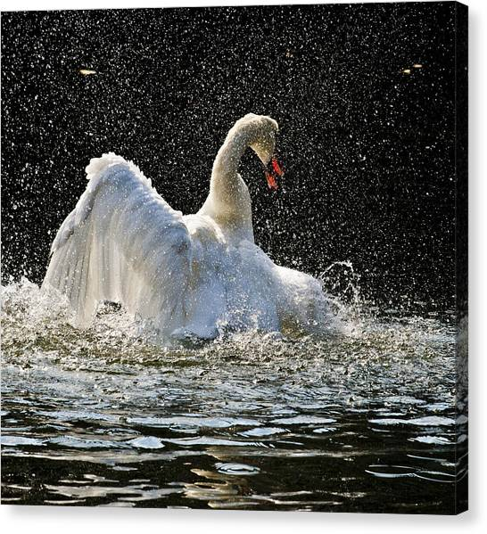 The Rain Dance Canvas Print