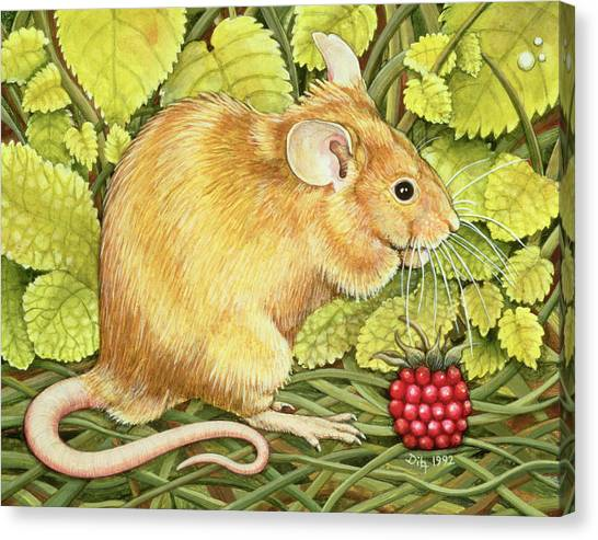 Raspberries Canvas Print - The Raspberry Mouse by Ditz