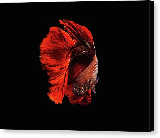 Aquariums Canvas Print - The Red by Andi Halil