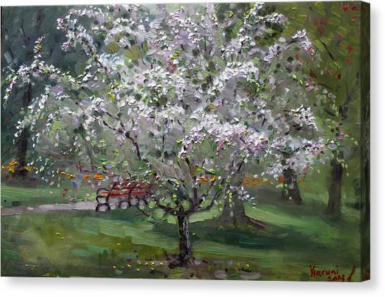 Tree Blossoms Canvas Print - The Red Bench by Ylli Haruni