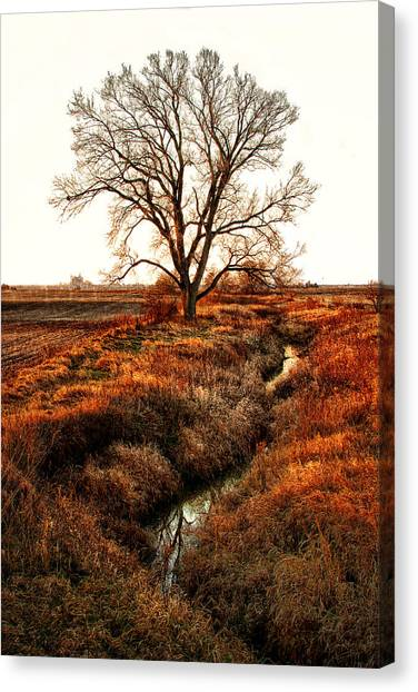 The Red Morning Tree Canvas Print