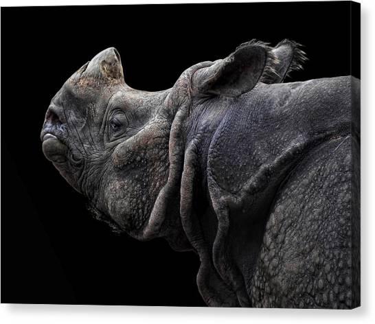 Rhinos Canvas Print - The Rhino by Joachim G Pinkawa