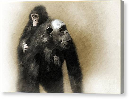 Chimpanzee Canvas Print - The Ride Home by Dan Holm