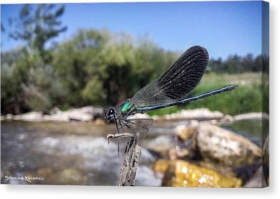 Canvas Print featuring the photograph The River Dragonfly by Stwayne Keubrick