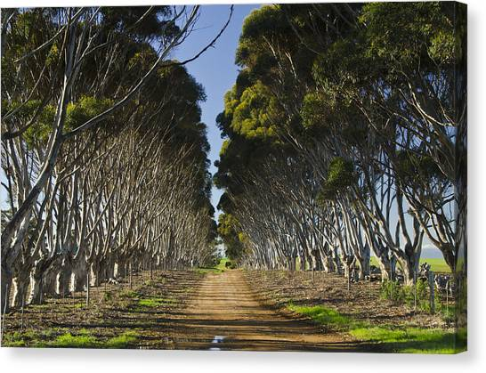 Dirt Road Canvas Print - The Road Home by Aaron Bedell