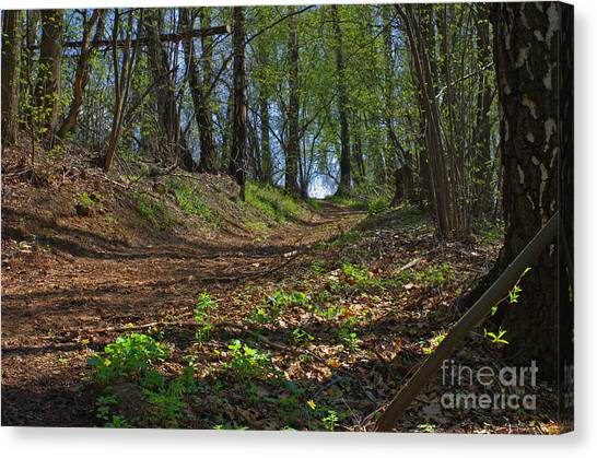 The Road In Spring Forest Canvas Print by