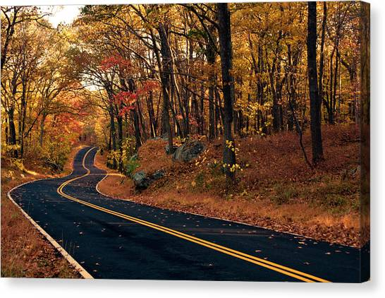 The Road Into Autumn Canvas Print by Zev Steinhardt