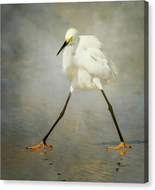 Egrets Canvas Print - The Rock Star by Alfred Forns