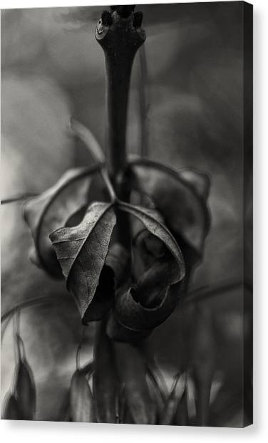 Canvas Print featuring the photograph The Rolled Leaf by Andreas Levi