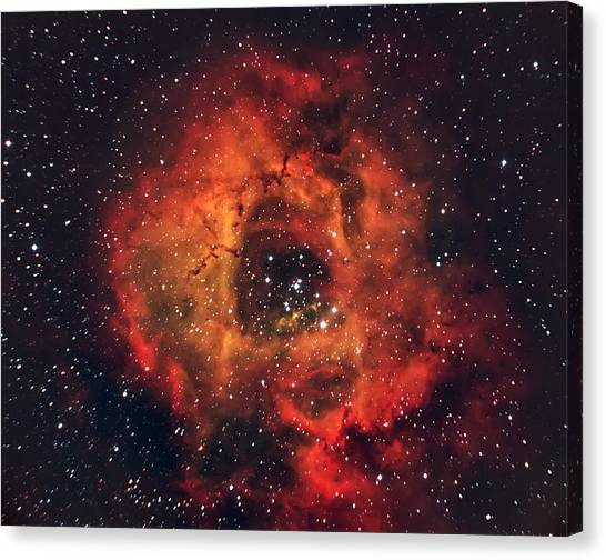Cosmos Flower Canvas Print - The Rose In The Sky by Andrea Auf Dem