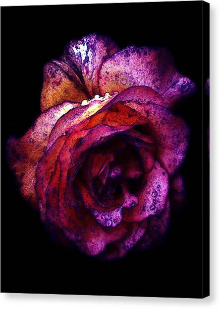 The Royal Rose Canvas Print