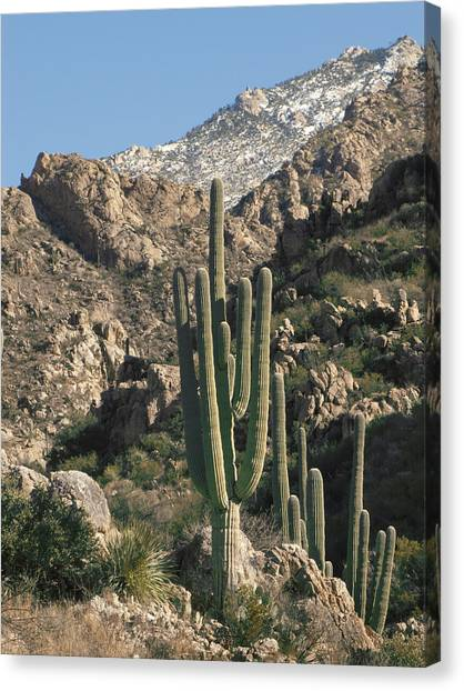 The Rugged Catalina Mountains Canvas Print