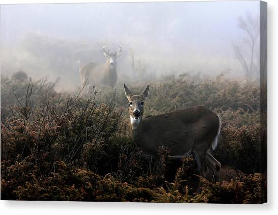 White-tailed Deer Canvas Print - The Rut In On - White-tailed Deer by Jim Cumming