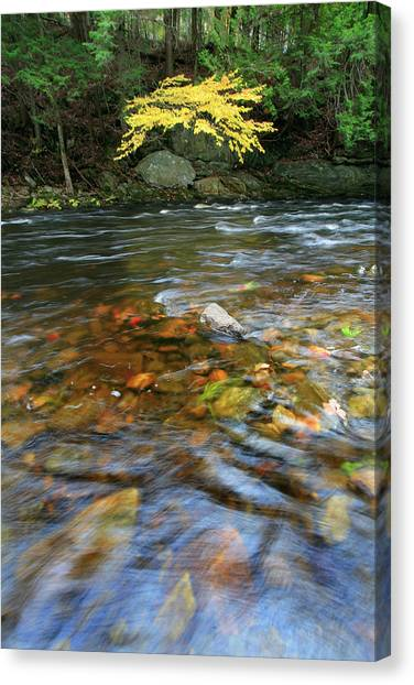 Appleton Canvas Print - The Saint George River In Autumn by Chris Pinchbeck
