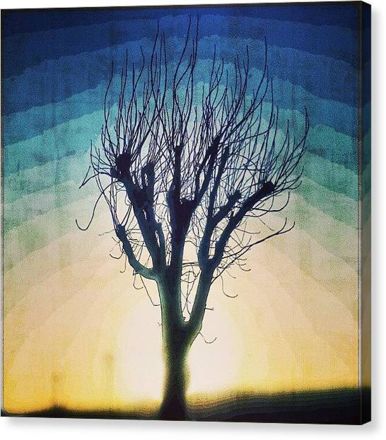 Ashes Canvas Print - The Same Poor Old Ash Tree by Alexandra Cook