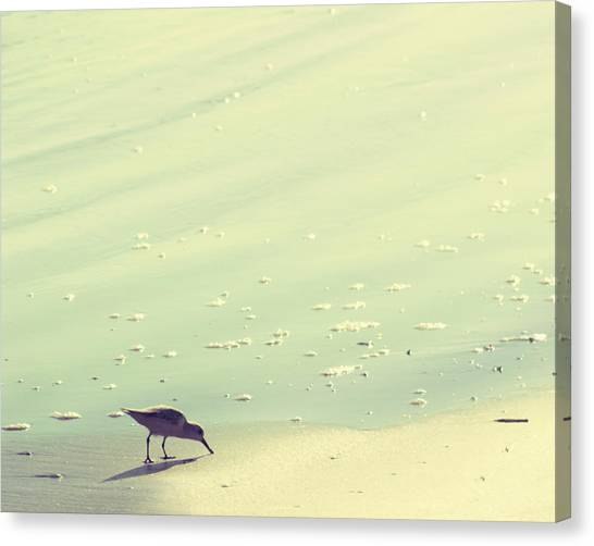 Sandpipers Canvas Print - The Sandpiper by Amy Tyler