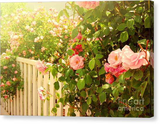 The Scent Of Roses And A White Fence Canvas Print
