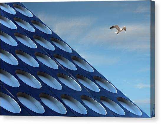 Seagull Canvas Print - The Seagull by Henk Van Maastricht