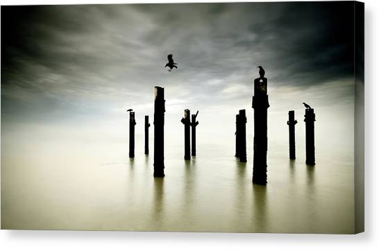 Crows Canvas Print - The Sentinels by Paulo Dias
