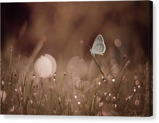 Grass Canvas Print - The Serenity by Ahmad Baihaki