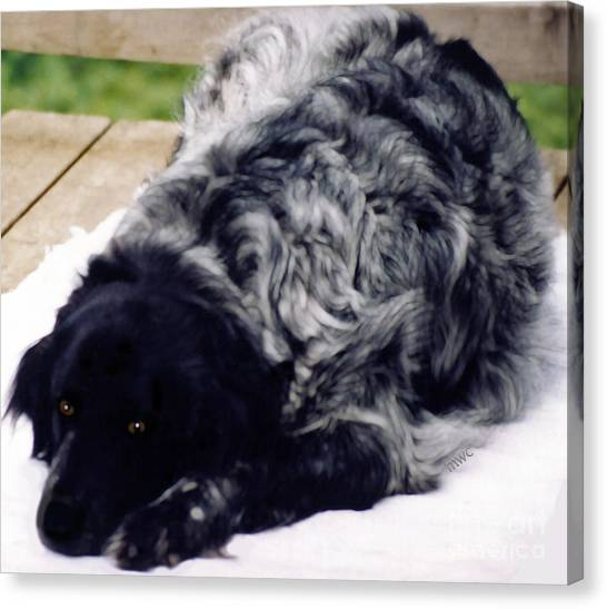Canvas Print featuring the photograph The Shaggy Dog Named Shaddy by Marian Cates