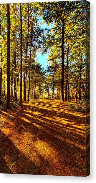 Forest Paths Canvas Print - The Short Cut by Phil Koch