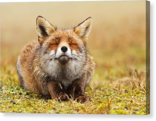 Humor Canvas Print - The Smiling Fox by Roeselien Raimond