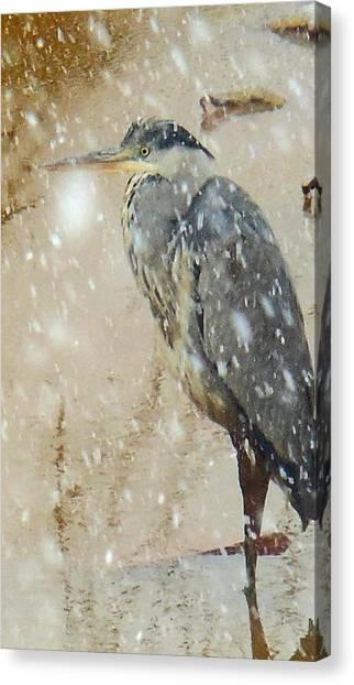 The Snow Bird Canvas Print