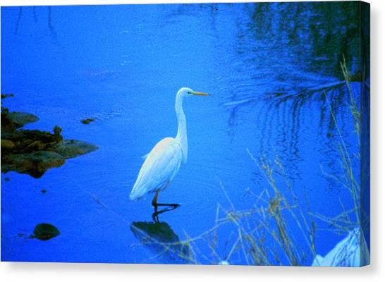 The Snowy White Egret Canvas Print