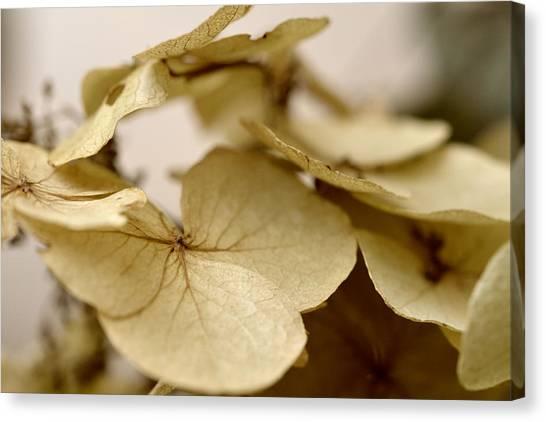 The Soft Whisper Of Petals Canvas Print