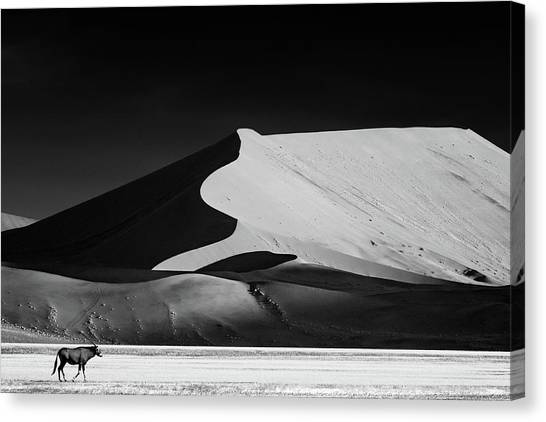 Deserts Canvas Print - The Solitary by Mathilde Guillemot