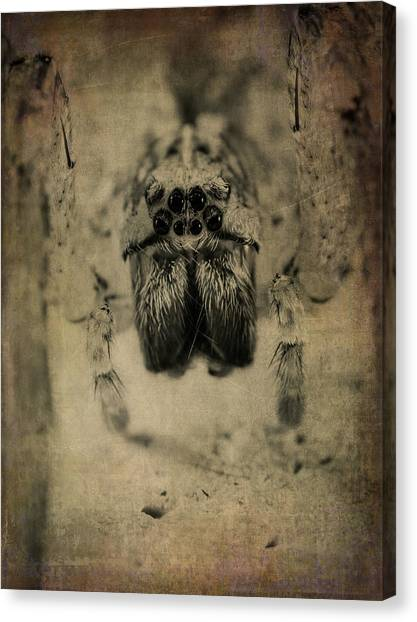 The Spider Series Xiii Canvas Print