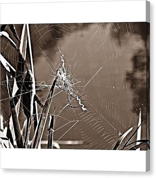 Spider Web Canvas Print - The Spiders Intricate Masterpiece  by Katie Phillips