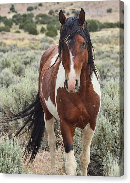 The Stallion Canvas Print by Gene Praag