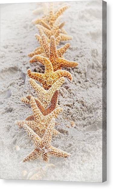 The Starfish Line Dance Canvas Print