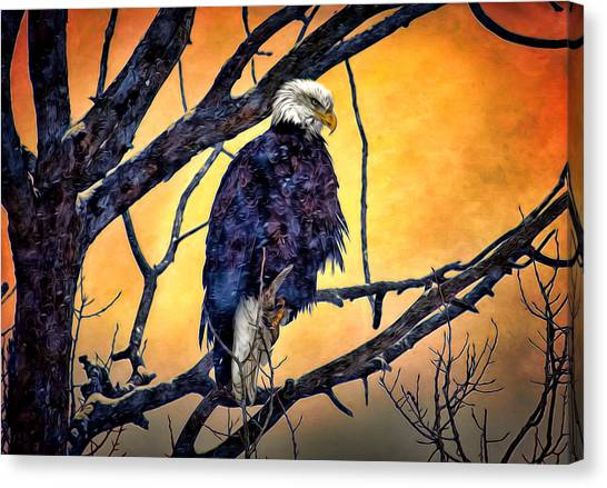 The Staring Eagle Canvas Print