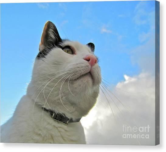 The Stoic Heroic Look Of A Cat Canvas Print