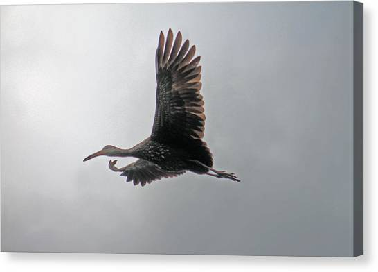 The Stork Canvas Print
