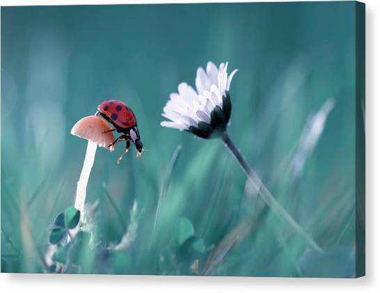 Bug Canvas Print - The Story Of The Lady Bug That Tries To Convice The Mushroom To Have A Date With The Beautiful Daisy by Fabien Bravin