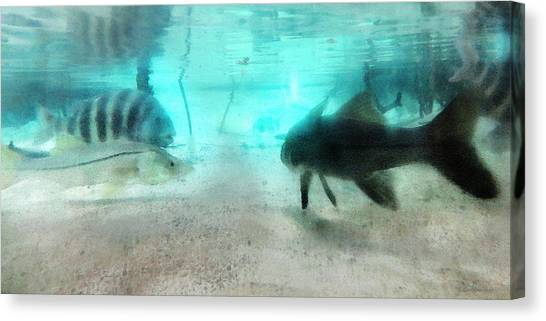 Florida Wildlife Canvas Print - The Storyteller - A Fish Tale By Sharon Cummings by Sharon Cummings