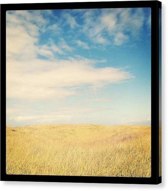 Seagrass Canvas Print - The Sun Came Out Of Hiding by Emily Lee