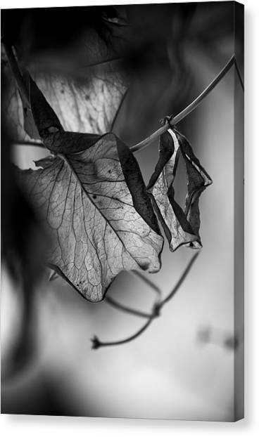 The Things Left Unsaid Canvas Print