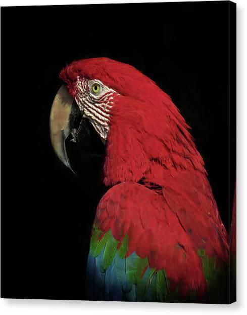 Macaw Canvas Print - The Thinker by Ferdinando Valverde
