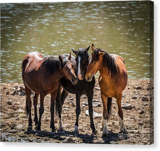 Sorrel Horse Canvas Print - The Three Amigos by Mitch Shindelbower