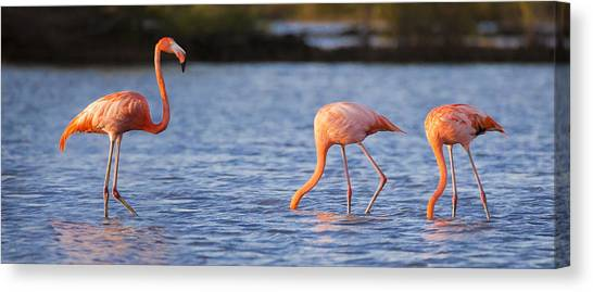 Flamingos Canvas Print - The Three Flamingos by Adam Romanowicz