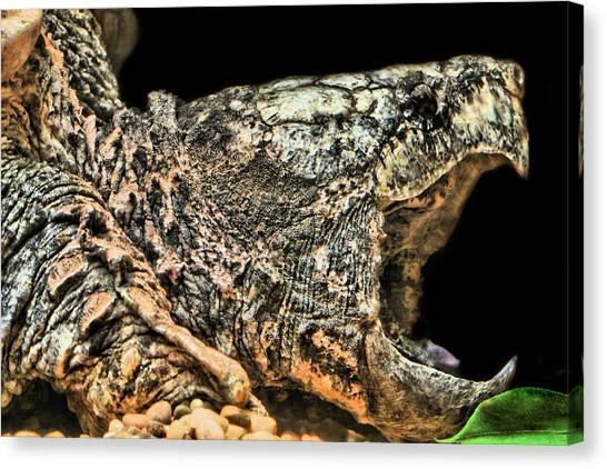 Snapping Turtles Canvas Print - The Trap Is Set by JC Findley