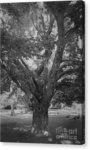 The Tree By The Lake Canvas Print