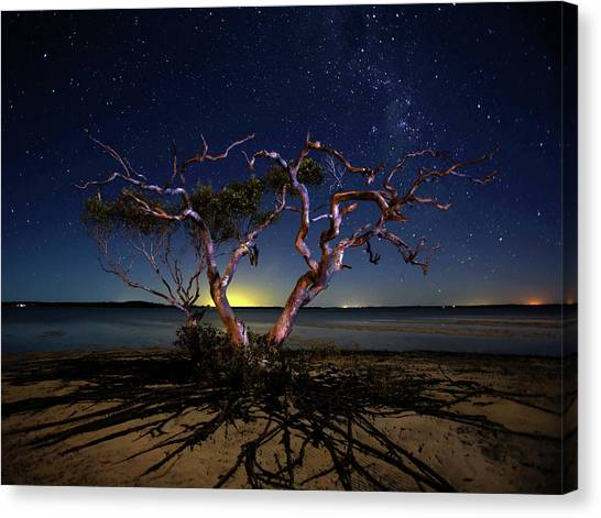 Mangrove Trees Canvas Print - The Tree by Mel Brackstone