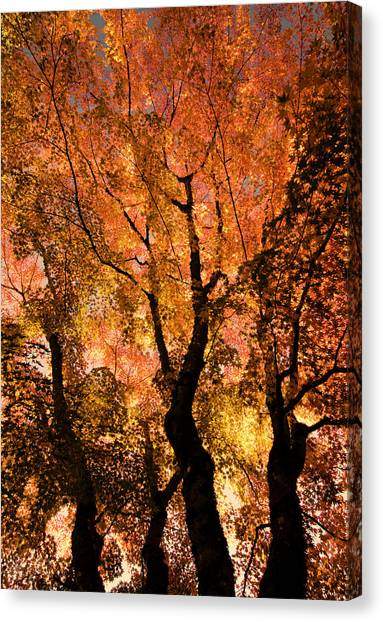 The Trees Dance As The Sun Smiles Canvas Print